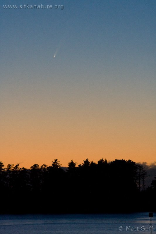 Comet McNaught at Sunset
