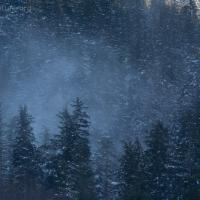 Snow Blowing through Trees