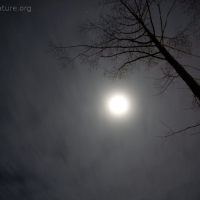 Moon and Clouds at Night