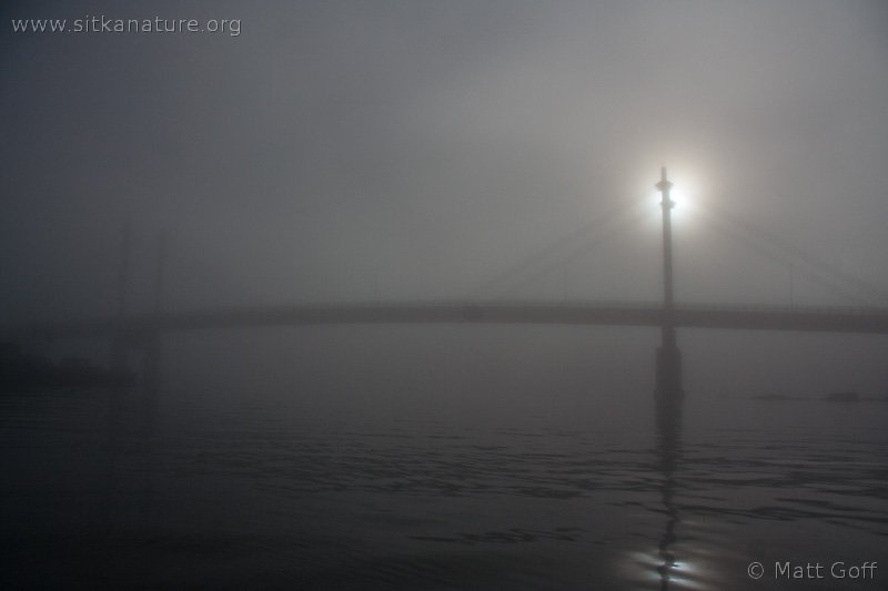 O'Connell Bridge in the Fog