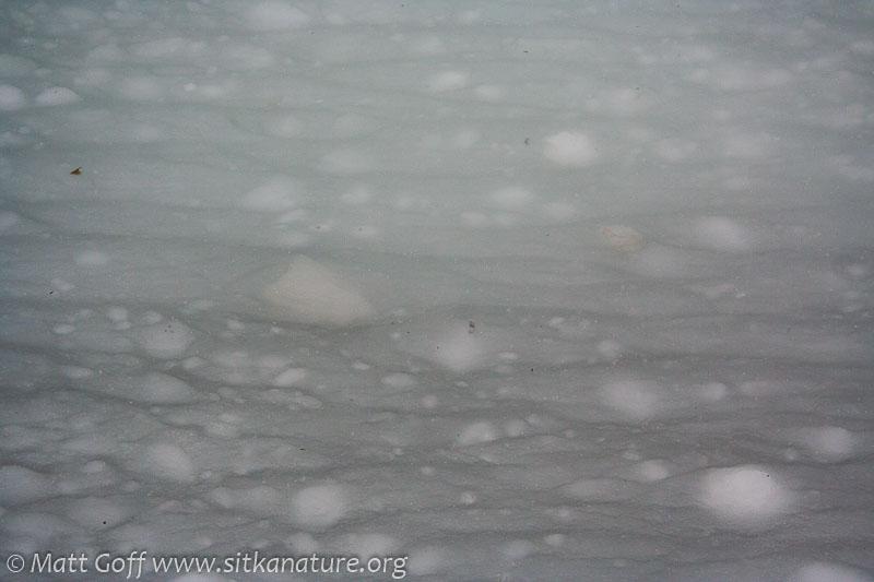 20070302-20070302-totem_park_snow-3.jpg