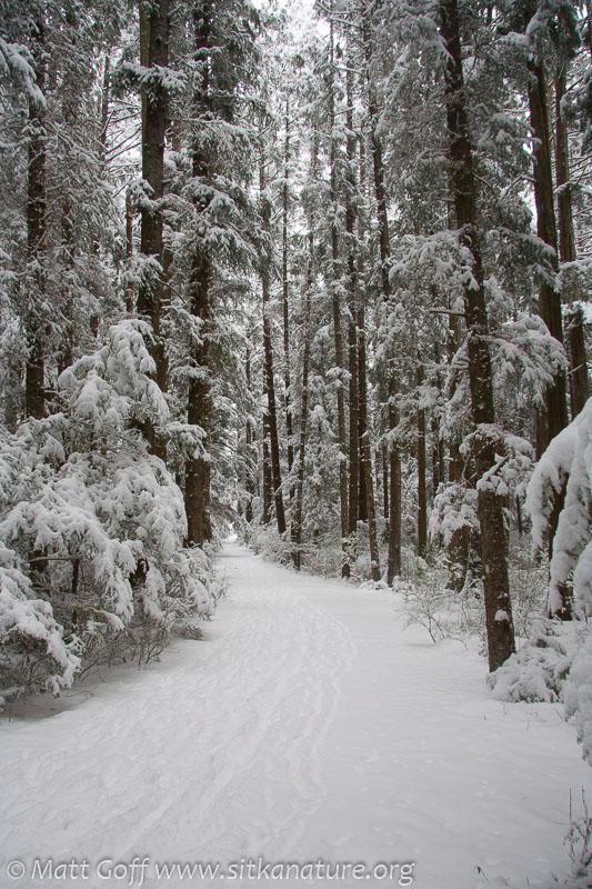 20070302-20070302-totem_park_snow-7.jpg