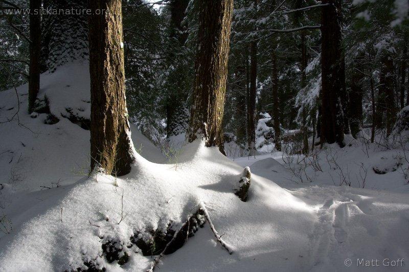 Westwood Trail Snow
