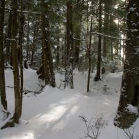 Sunlight on the Snow
