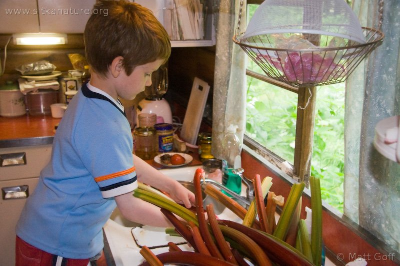 Connor Helping with Rhubarb