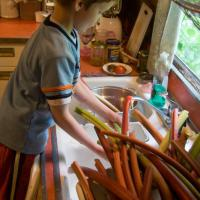 VConnor Helping with Rhubarb