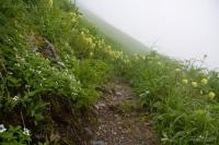 Wildflowers along Harbor-Gavan Trail
