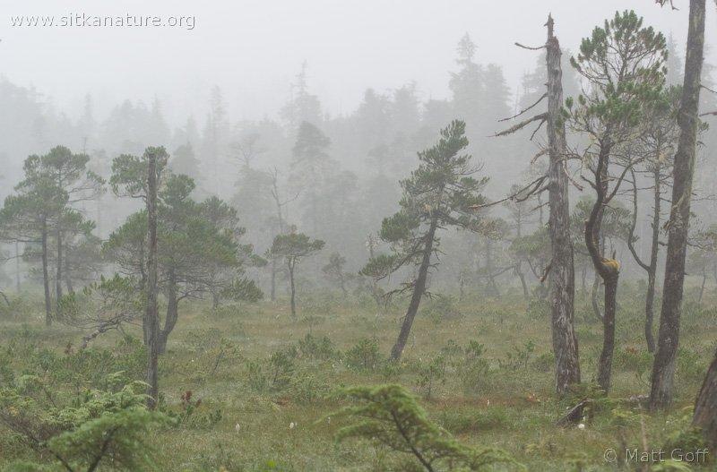 20070806-muskeg_fog-1.jpg