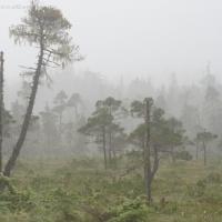 20070806-muskeg_fog-2.jpg