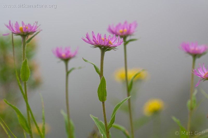 20070809-wildflowers-1.jpg