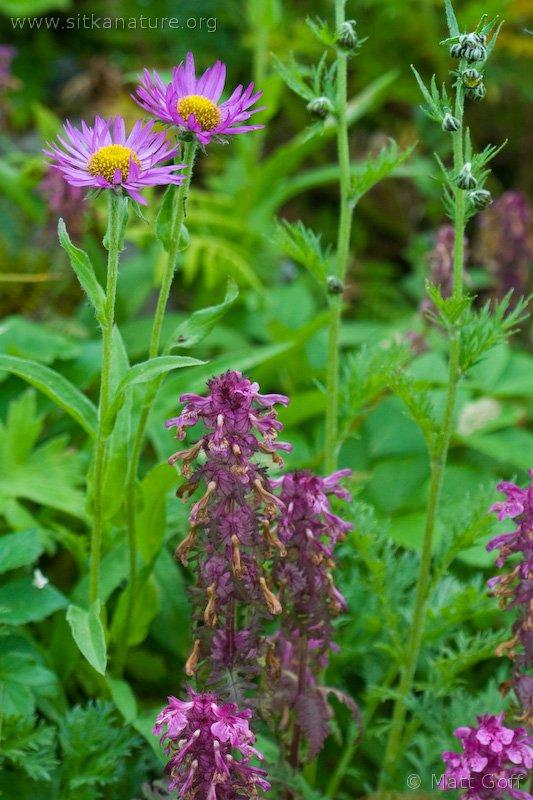 20070809-wildflowers.jpg