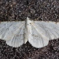 20070809-moth.jpg