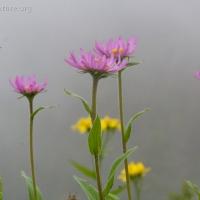 20070809-wildflowers-2.jpg