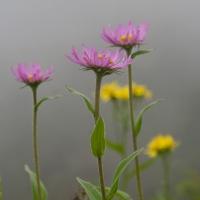 20070809-wildflowers-3.jpg