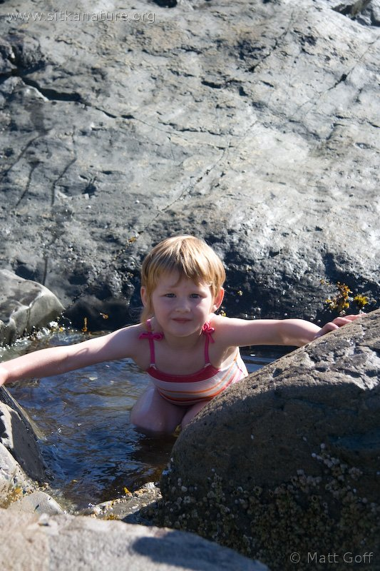 Rowan in a Tidepool