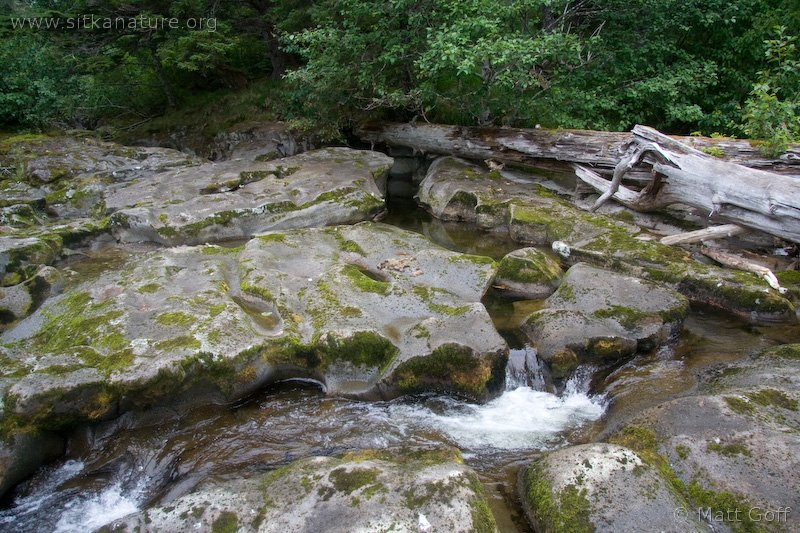 20070818-freds_creek-1.jpg