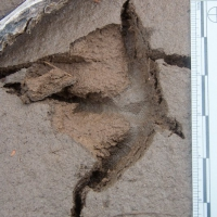 20070818-sandhill_crane_tracks-3.jpg