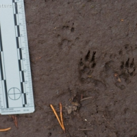 20070818-squirrel_tracks-1.jpg