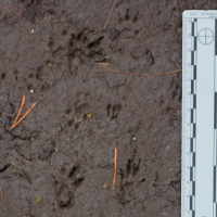 20070818-squirrel_tracks-2.jpg
