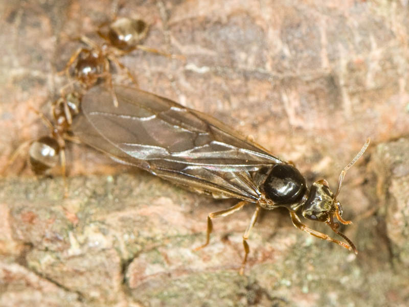 20070822-20070822-ant_flight-1.jpg