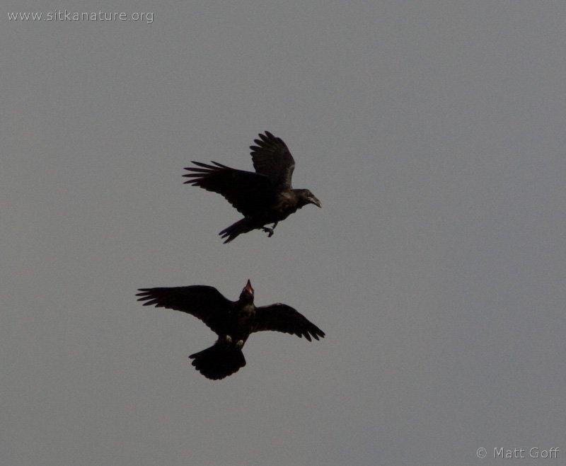 20070822-ravens-2.jpg