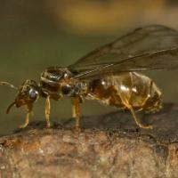 20070822-20070822-ant_flight-2.jpg