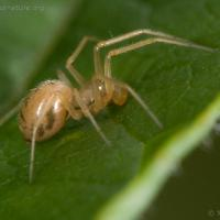 20070822-spider-1.jpg