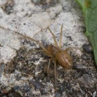 20070822-spider-2.jpg