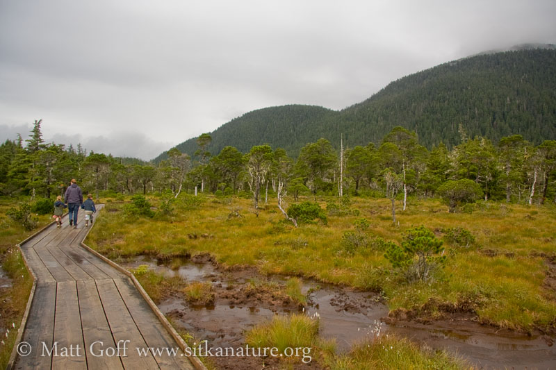 20070824-20070824-forest_muskeg_trail.jpg