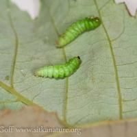 20070824-20070824-caterpillar-1.jpg