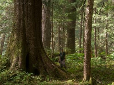 20070826-forest_trees-3.jpg