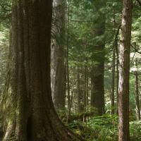 20070826-forest_trees-1.jpg