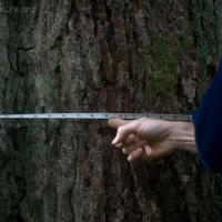 20070826-tree_measurement.jpg