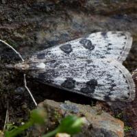 20070903-moth.jpg