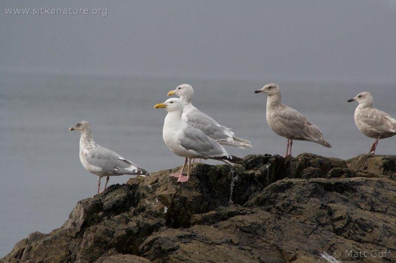 20070905-gulls.jpg