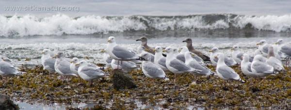 20070921-gulls.jpg