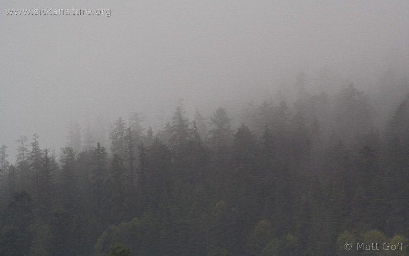 20070924-forest_fog-1.jpg