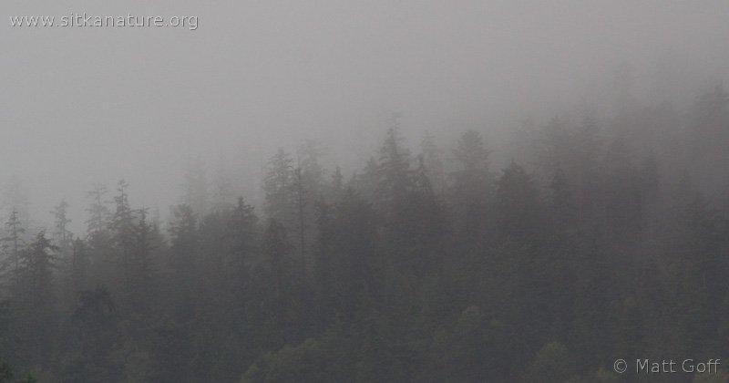 20070924-forest_fog-2.jpg