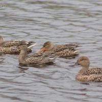 20070924-ducks-2.jpg