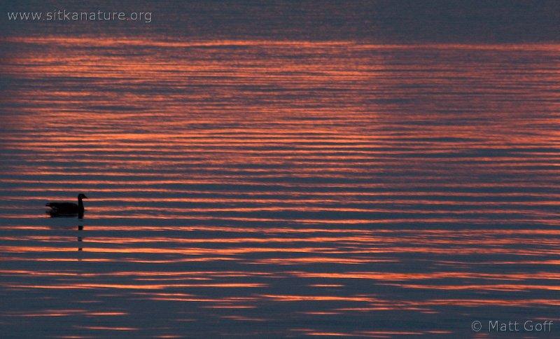 20071009-sunset_goose-1.jpg