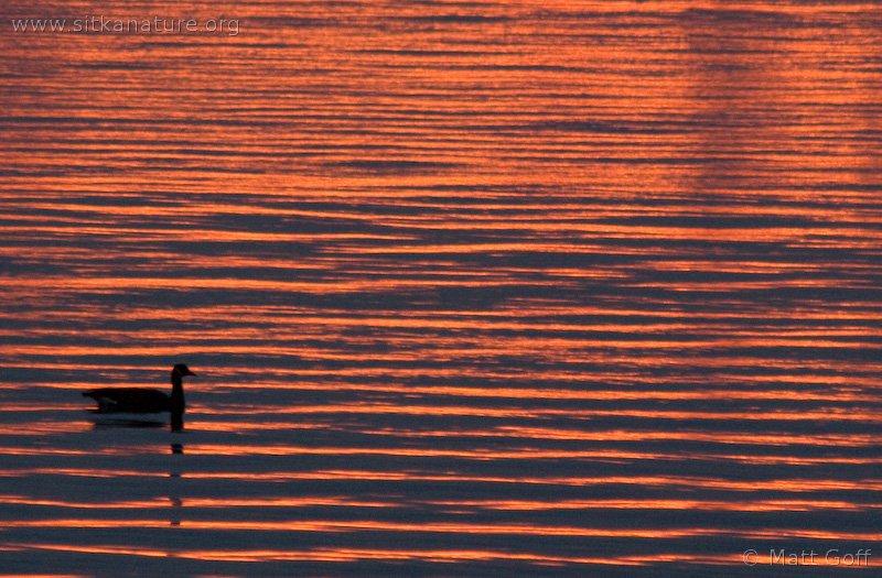 20071009-sunset_goose-2.jpg