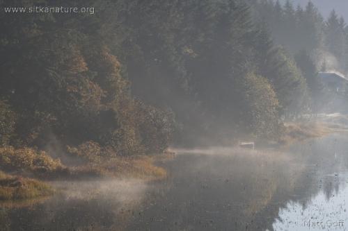 Morning Fog over Swan Lake