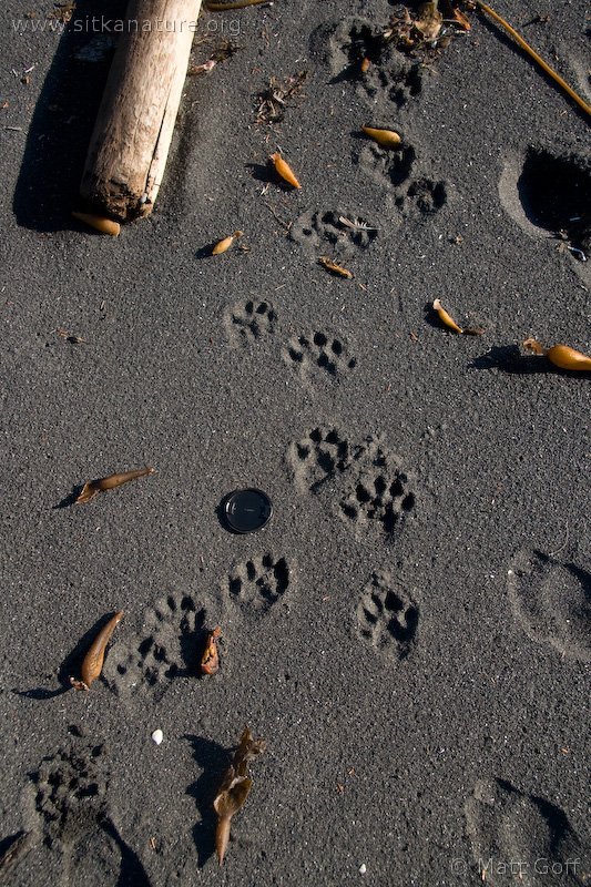 20071108-lontra_candensis_tracks-1.jpg