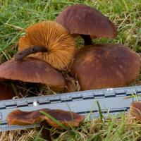 20071108-fungus-4.jpg
