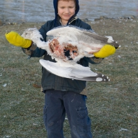 Connor and a Dead Gull