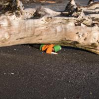 Connor Crawling Under Log