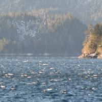 Waves off of Old Sitka