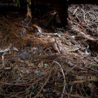 Owl Kill Site