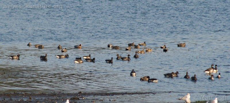 Port Krestof Waterfowl