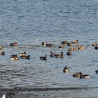 Port Krestof Waterfowl